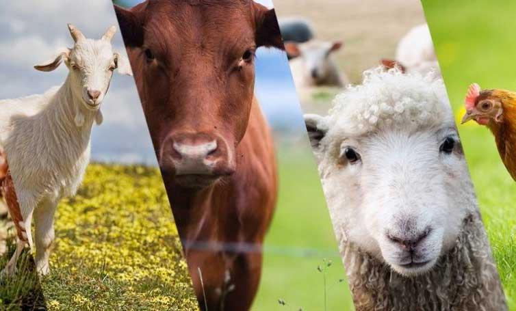 turkiyedeki-hayvancilik-orgutleri